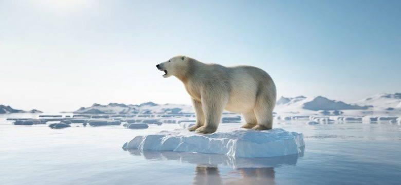 Arktik Deniz Buzu son 40 yılda yüzde 50 oranında eridi: Bilim insanları yok olacağı tarihi hesapladı